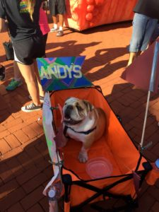 Dog in wagon at race.
