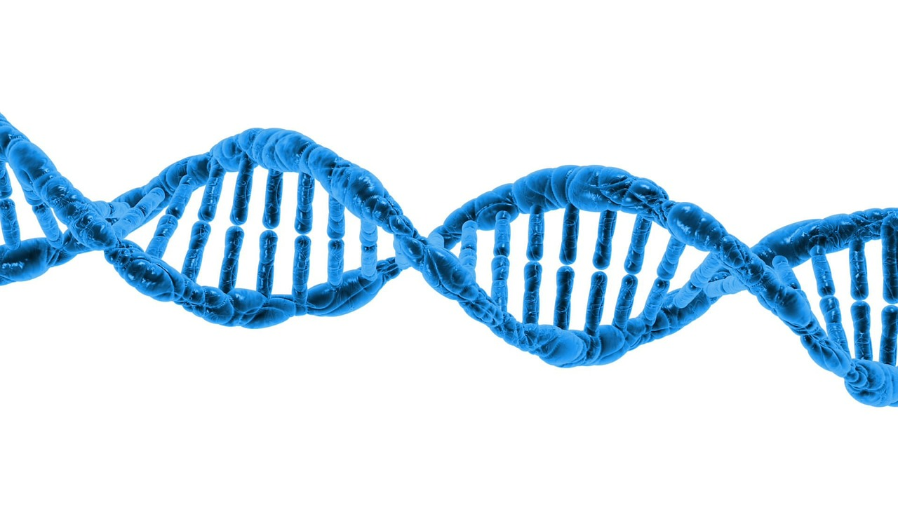 How does your DNA affect your risk for cancer?
